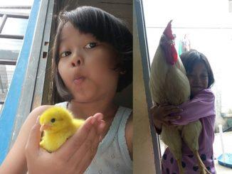 Bela Anak Ayam Ganti Ketagihan Gajet