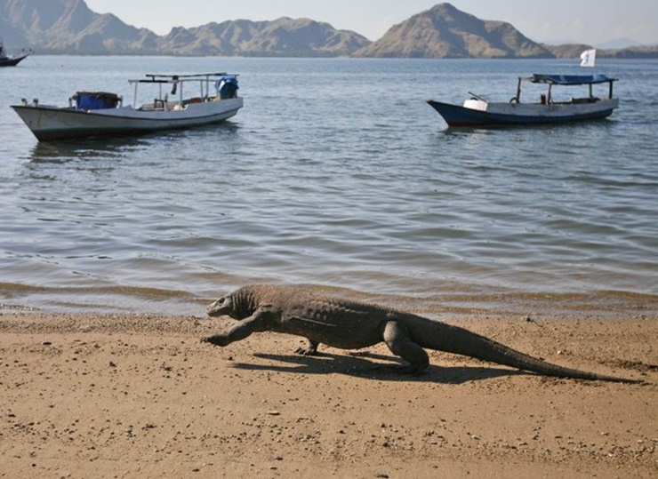 Bayaran Masuk Pulau Komodo