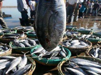Stok Ikan Malaysia