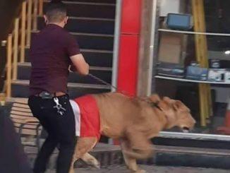 Protes Bawa Singa Di Baghdad 1