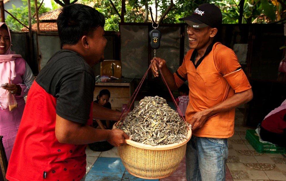 Cicak Diburu Untuk Dijual Di Indonesia 1