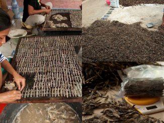 Cicak Diburu Untuk Dijual Di Indonesia 5