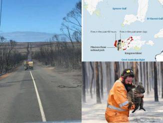Kebakaran Hutan Australia Jejas Hampir 1 Bilion Haiwan 9