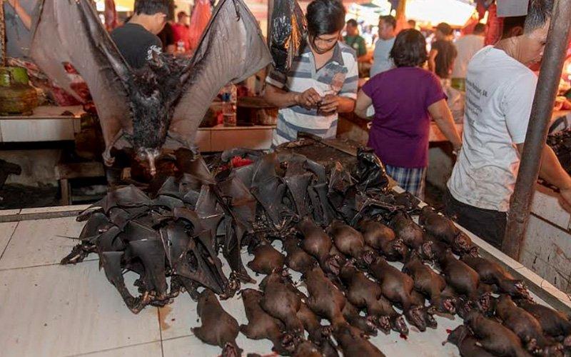 Penularan Wabak Koronavirus Tak Jejas Jualan Daging Kelawar Di ...