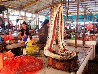 Tak Pernah Serik, Pasar Basah China Kembali Operasi