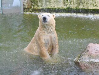 Hadapi Krisis Kewangan, Haiwan Di Zoo Mungkin Jadi Korban Makanan Haiwan Lain