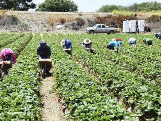 500 Ribu Tawaran Peluang Pekerjaan Sektor Perladangan Dibuka 1