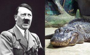 Buaya Yang Didakwa Milik Adolf Hitler Dilaporkan Mati Di Zoo Berlin 3