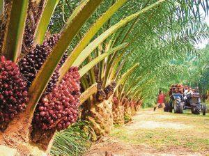 India Sambung Import Minyak Sawit Malaysia Selpas 4 Bulan Memboikot