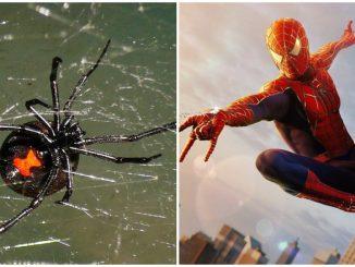 Digigit Labah-Labah Jadi Spider-Man