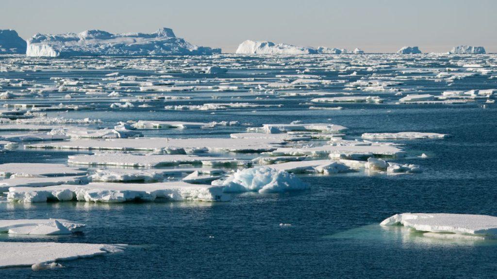 Hidupan Cengkerang Laut Antara Spesis Berisiko Pupus Akibat Perubahan Iklim Dunia 1