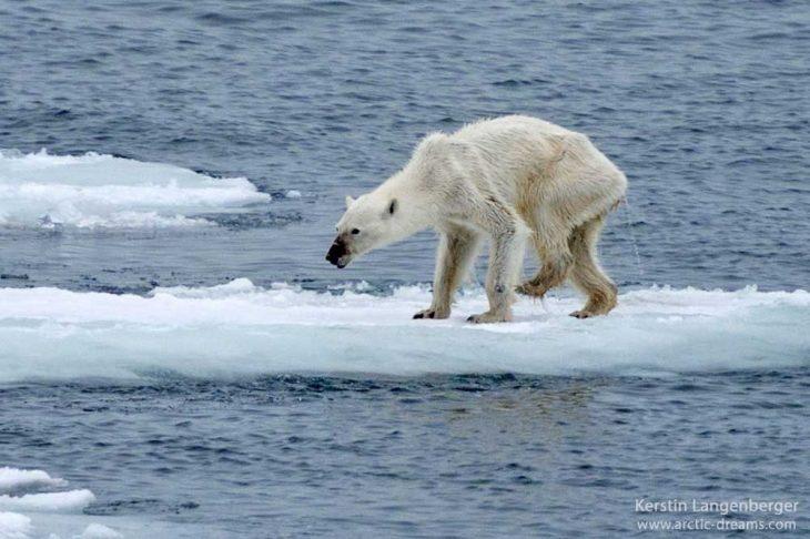 Hidupan Cengkerang Laut Antara Spesis Berisiko Pupus Akibat Perubahan Iklim Dunia