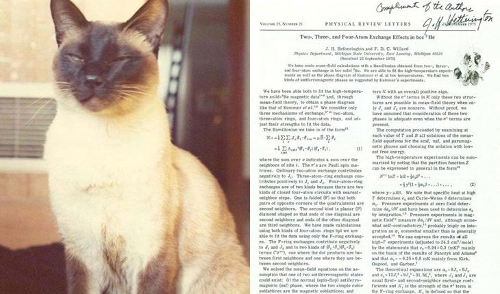 Kenali Satu-Satunya Kucing Bijak Yang Memiliki Kertas Kajian Saintifik Sendiri 3