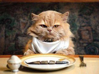 Logik Kucing Ketahui Sebab Mengapa Mangkuk Ada Sedikit Makanan Sering Dianggap Kosong 1