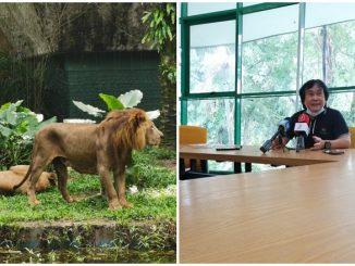 Singa Zoo Negara Kurus