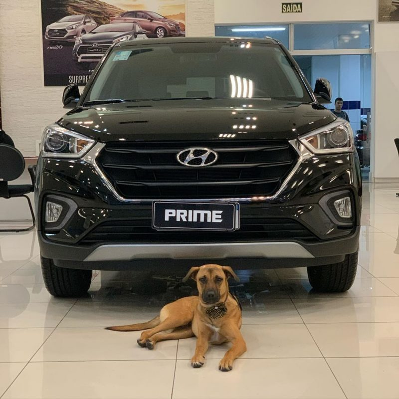 Anjing Pekerja Hyundai