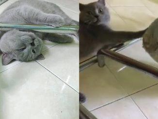 Penat Tolong Dodoi 'Adik' Dalam Buaian, Tonton Gelagat Lucu Kucing Ini 2