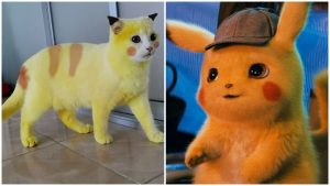 Kucing Pikachu