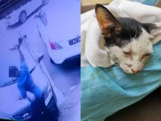 Aksi Lelaki Hempas Kucing Hingga Alami Pendarahan Undang Kemarahan Orang Ramai 3