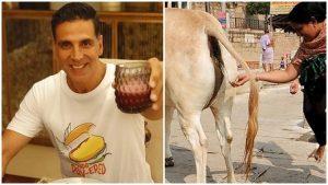 Akshay Kumar Minum Air Kencing Lembu