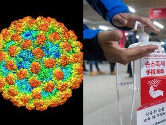 COVID-19 Belum Habis, Muncul Pula Norovirus 3