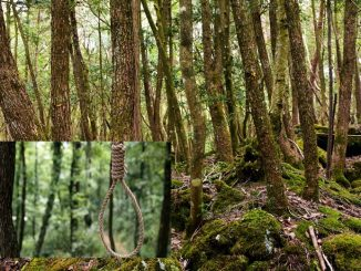 Hutan Bunuh Diri Aokigahara