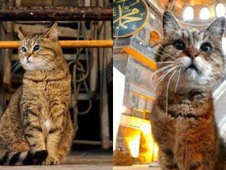 Gli Hagia Sophia Meninggal Dunia 1