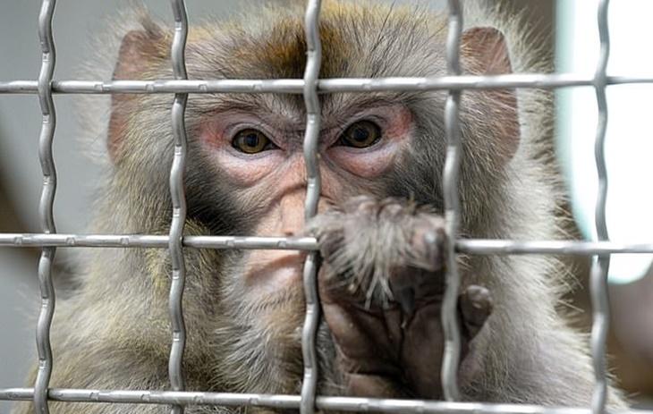 Kisah 2 Ekor Monyet Yang Ditangkap Atas Kesalahan Edar Dadah 2