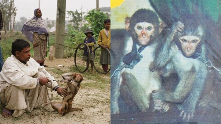Kisah 2 Ekor Monyet Yang Ditangkap Atas Kesalahan Edar Dadah 5