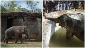 Kaavan Gajah Paling Sepi Di Dunia
