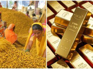 Kunyit Sri Lanka Harga Emas