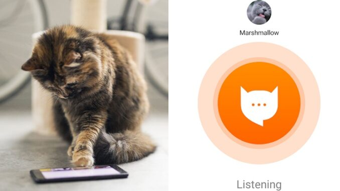 Aplikasi MeowTalk Fahami Bahasa Kucing