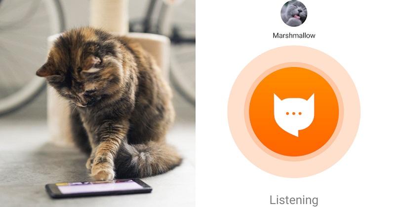 Nak Fahami Bahasa Kucing Aplikasi Ini Bantu Anda Ketahui Apa Yang Si Bulus Mahu