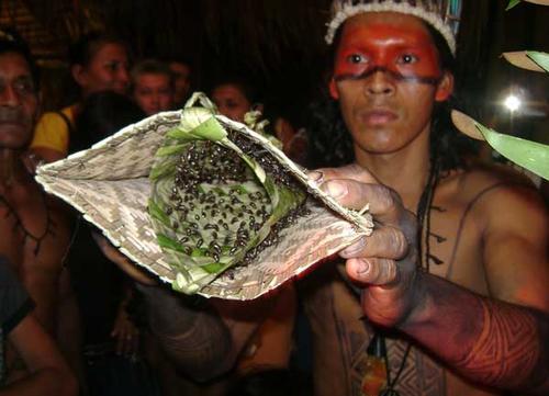 Kenali Suku Yang Gunakan Sarung Tangan Berisi Semut Selama 11 Jam Untuk Uji Tahap Akal Baligh Individu