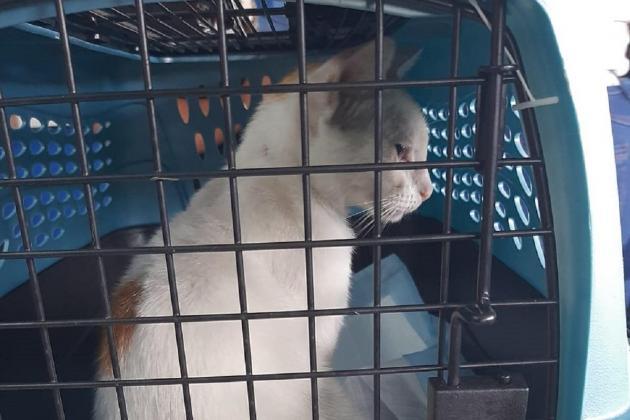 Kucing Ditahan Cuba Seludup Bekalan Dadah Untuk Penghuni Penjara 2