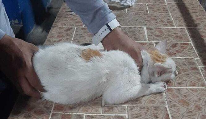 Kucing Ditahan Cuba Seludup Bekalan Dadah Untuk Penghuni Penjara 3