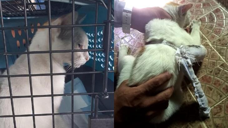 Kucing Ditahan Cuba Seludup Bekalan Dadah Untuk Penghuni Penjara 4