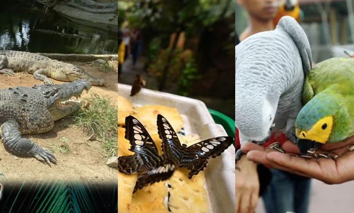 Lawatan Maya Zoo Malaysia